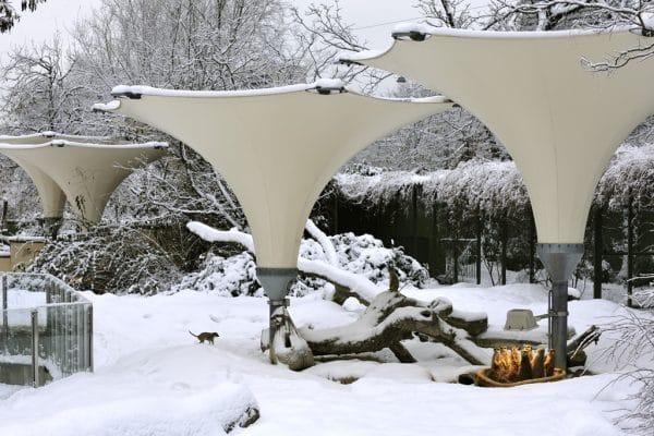 Erdmännchen Im Winter