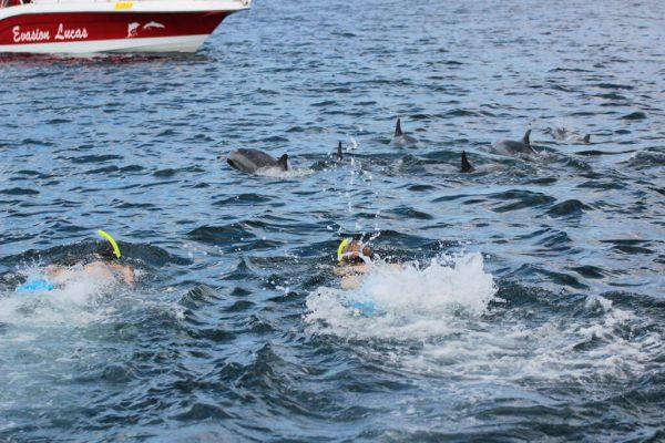 Delfinschwimmen Mit Spinner Delfinen Im Indischen Ozean