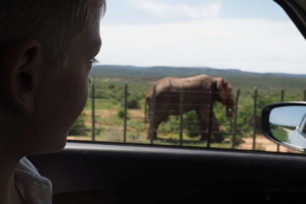 Blick Aus Dem Auto Auf Einen Elefanten