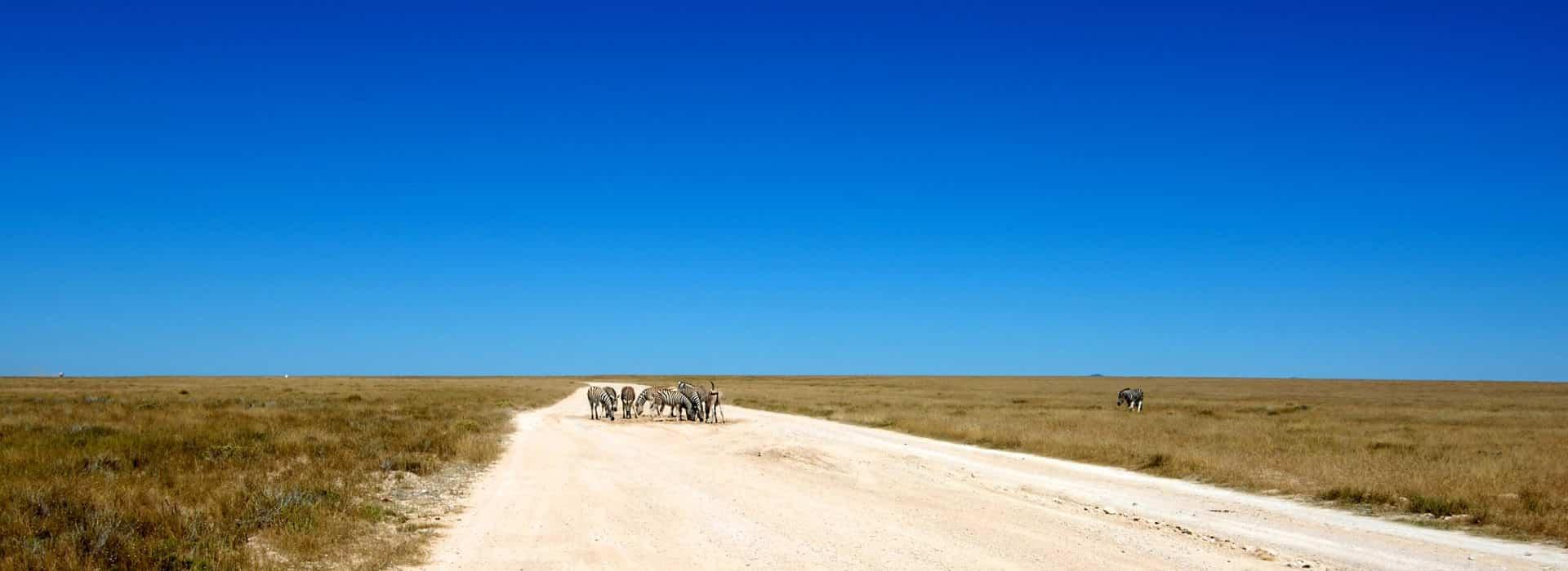 Blick Auf Den Etosha Nationalpark