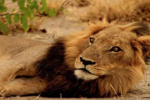 Kalahari Mietwagenreise