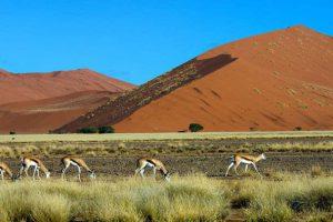 Namibia Sossusvlei Mietwagenreise Feature Image
