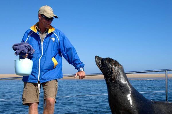 Walvis Bay Bootsfahrt Mit Robben In Namibia