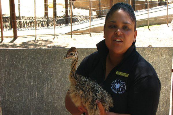 Cango Ostrich Farm In Oudtshoorn