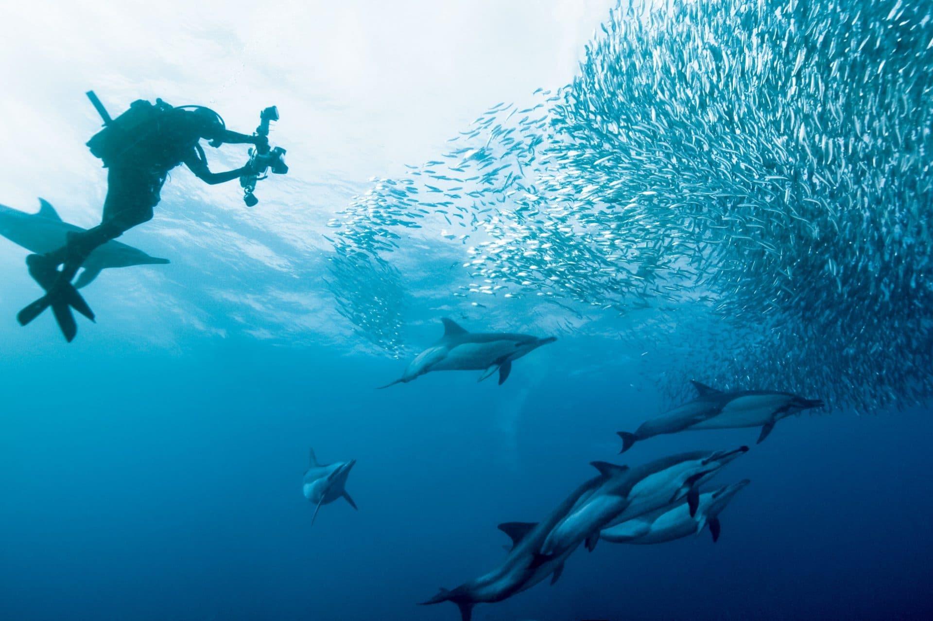 Scuba Diving im indischen Ozean