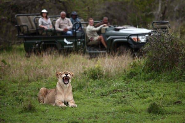 Südafrika Reisen - Phinda Flugsafari