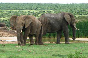 Garden Route & Karoo Mietwagenreise