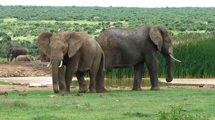 Suedafrika Garden Route Karoo Mietwagenreise Feature Image