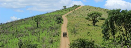 Hluhluwe IMfolozi Nationalpark Safari