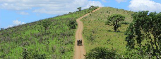 Hluhluwe IMfolozi Nationalpark Safari