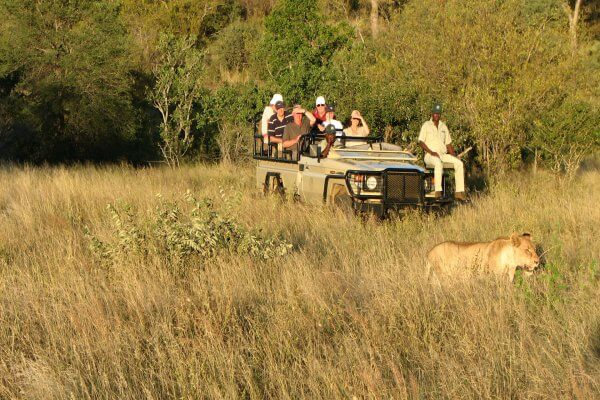 Suedafrika Krueger Park Loewe Vor Jeep