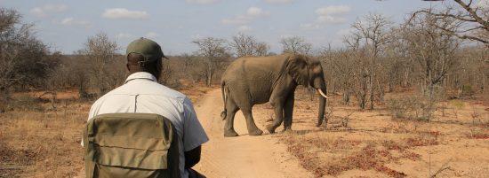 Südafrika Ranger Mit Elefant Auf Safari
