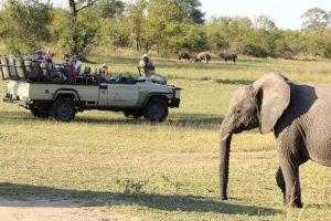 Krüger Park & Garden Route Mietwagenreise Südafrika
