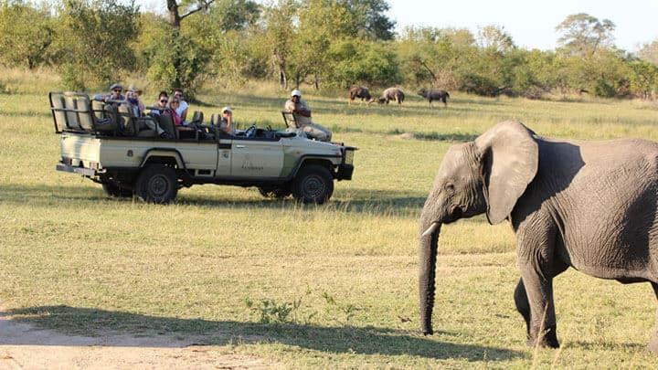 Suedafrika Kruger Park Gardenroute Mietwagenreise Feature Image
