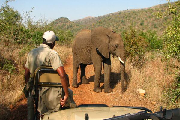 Suedafrika Kwa Zulu Natal Elefant Vor Ranger