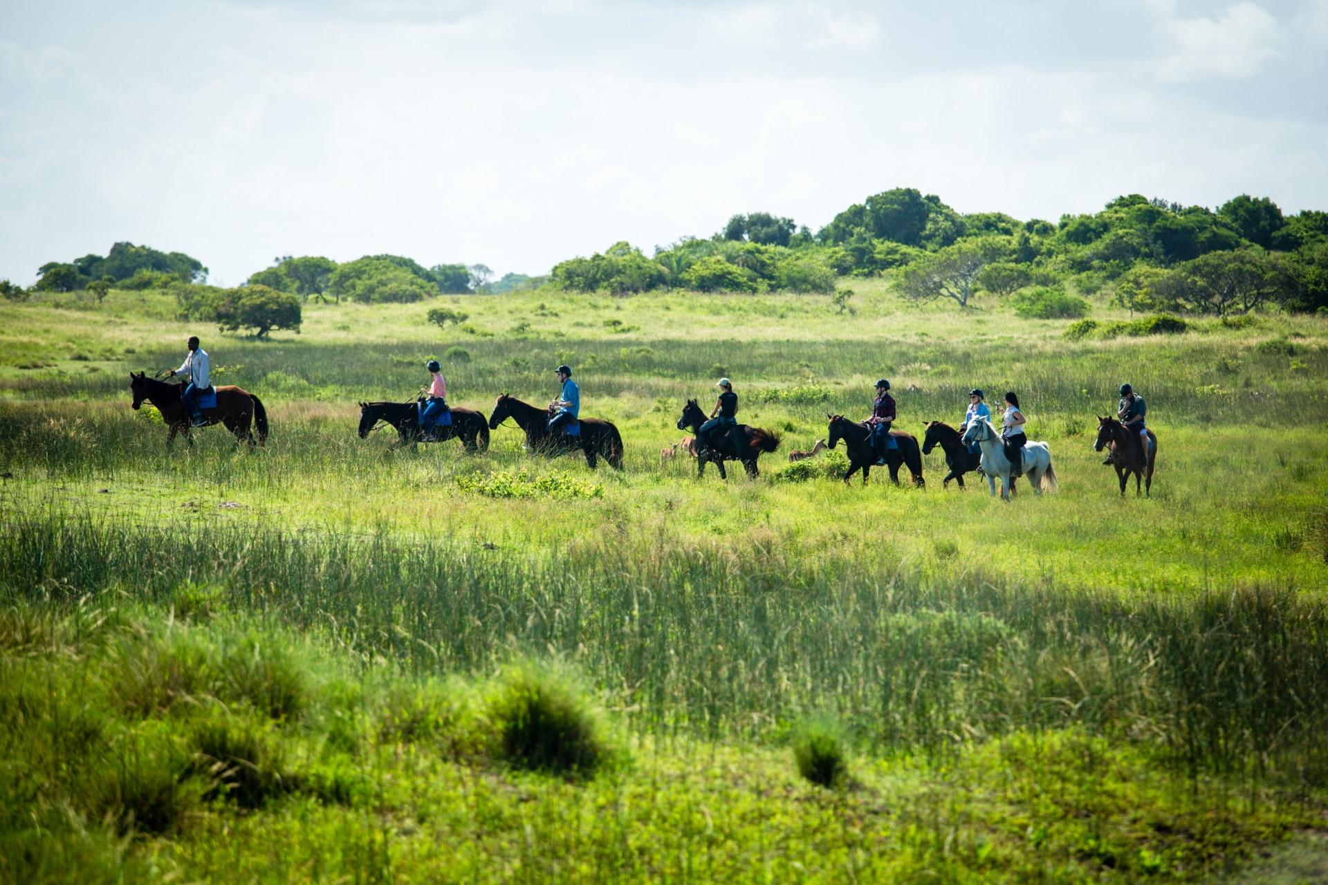 Safari auf dem Rücken der Pferde