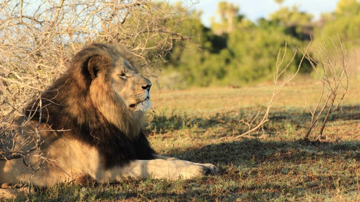 Suedafrika Madike Mietwagenreise Feature Image