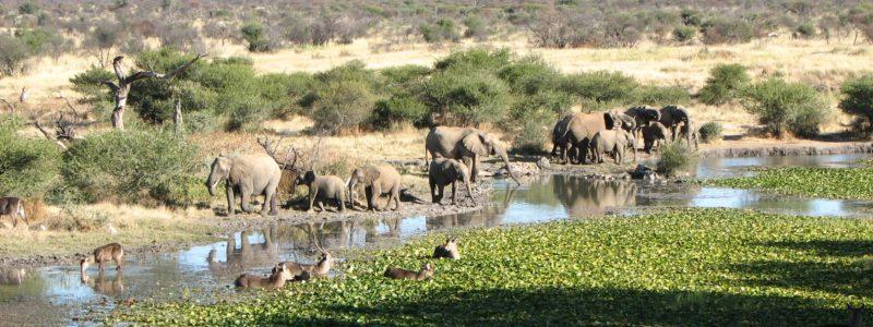 Madikwe Game Reserve Elefanten
