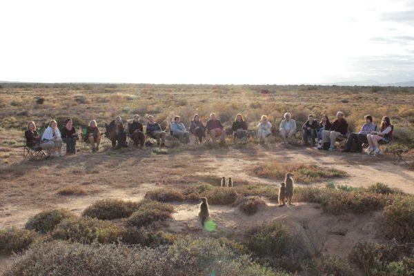 Erdmännchen Tour In Oudtshoorn Mit Meerkat Adventures