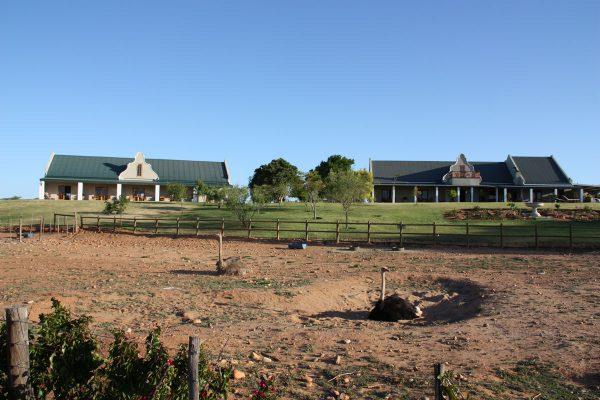 Authentische Straußenfarm Tour Auf Mooiplaas
