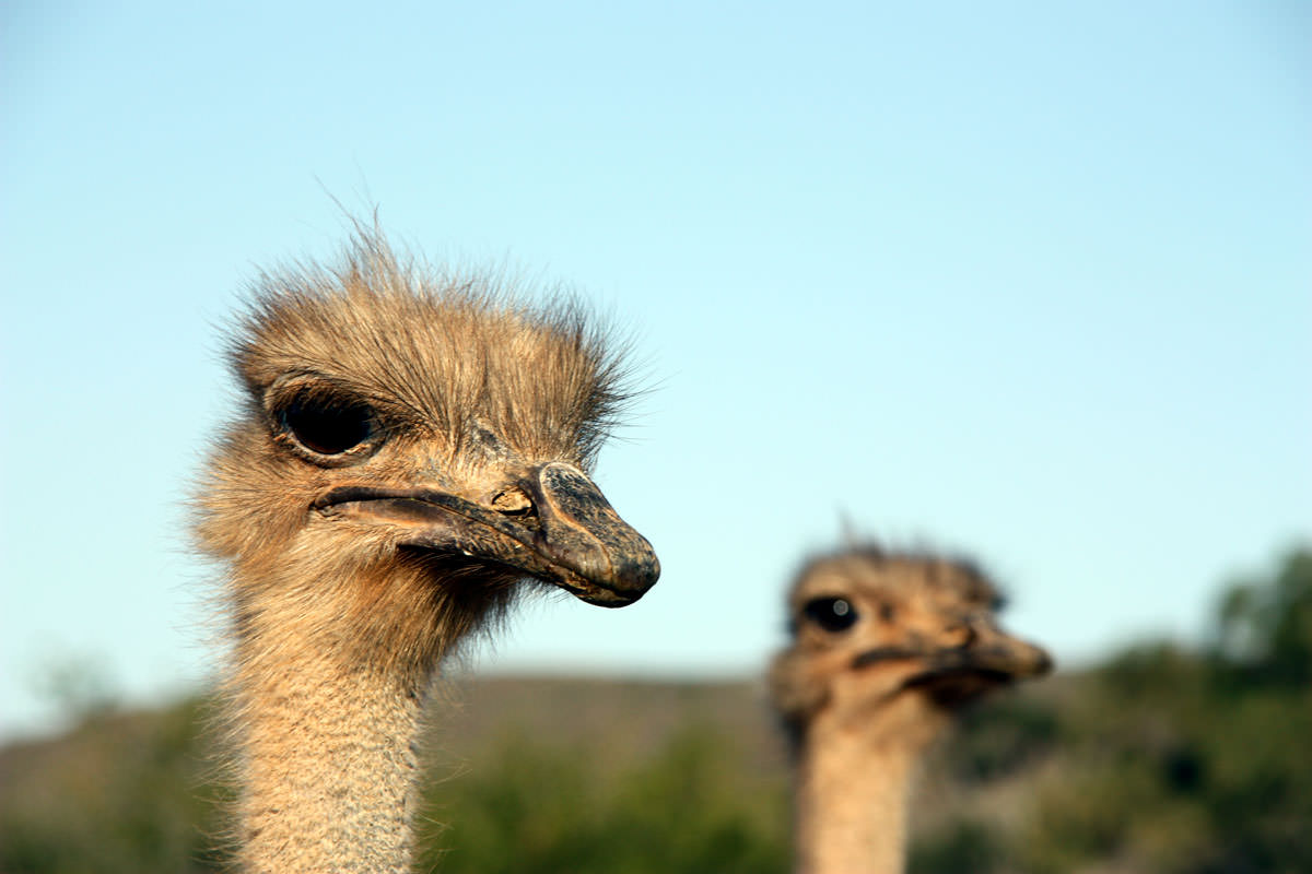 De Denne Ostrich Farm Tour