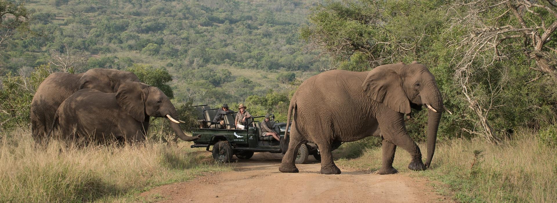 suedafrika phinda game reserve header