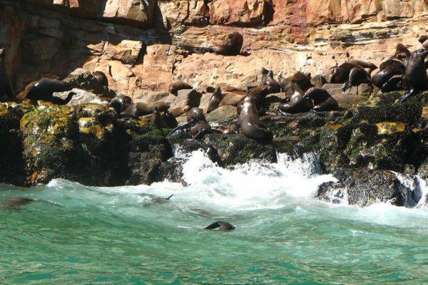 Robberg Halbinsel Im Wasser