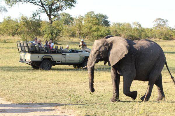 Suedafrika Sabi Sand Elefant Vor Safarifahrzeug