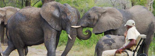 Elephant Plains Elefanten Auf Safari