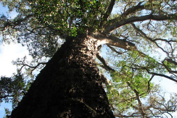 Big Tree Stamm Von Unten