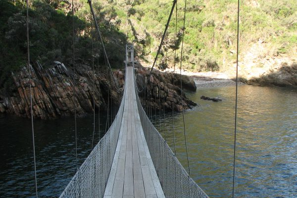 Suspension Bridge Im Tsitsikamma National Park