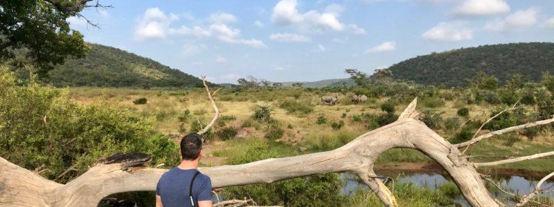 Nashörner Zum Fuß