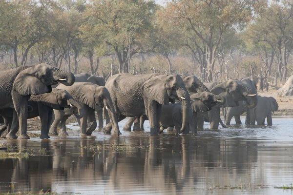 Sunway Botswana Moremi Elephants Drink