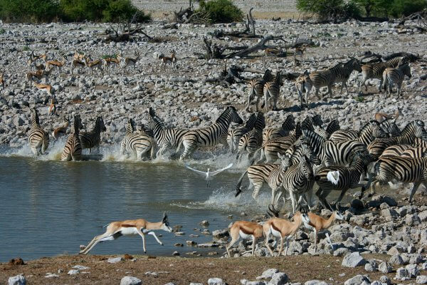 Sunway_namibia_etosha_waterhole