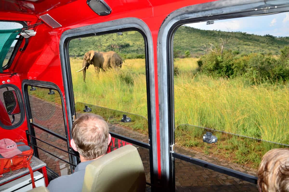 Ausblick aus dem Safari-Truck auf einen Elefanten