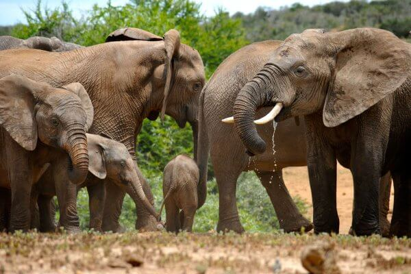 South Africa Animals – 45