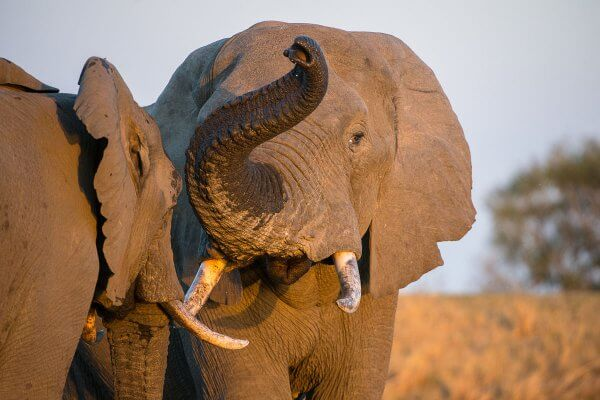 Sunway_south_africa_kruger_elephant