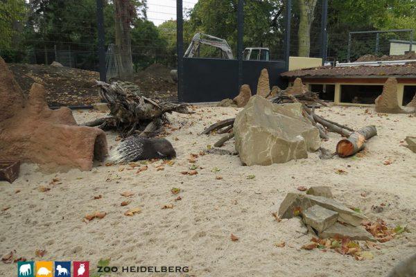 Erdmännchen Gehege Im Zoo Heidelberg